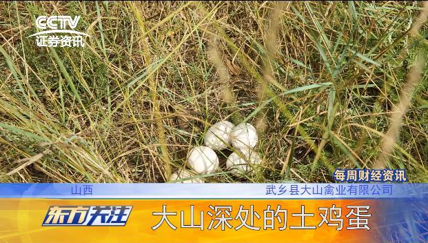 CCTV证券资讯频道《东方关注》走近大山禽业